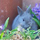 Easter Buny01 by DanTheBugleMan