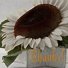 Thanks - Short Petal Albino Sunflower  by Sandra Foster