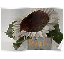 Thanks - Short Petal Albino Sunflower  Poster