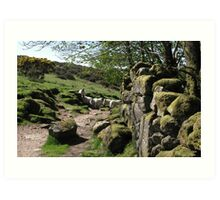 natives of Dartmoor Art Print