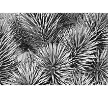 Joshua Tree Textures Photographic Print