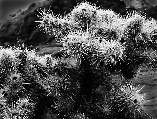 Cholla Cactus No. 1 by Benjamin Padgett