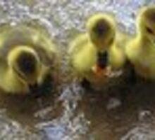 three muskateers by ronnie714
