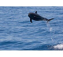 Jumping Dolphin Photographic Print