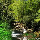 Great Smoky Mountain Stream by Lisa G. Putman