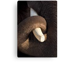 Tusk and Trunk Canvas Print