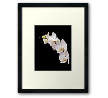 Arc of White Orchids Framed Print