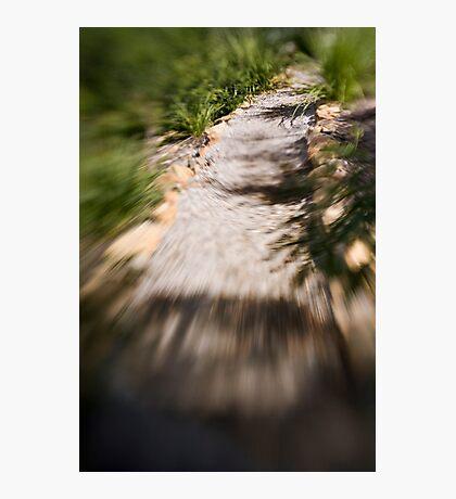 Berima X - Lensbaby Photographic Print