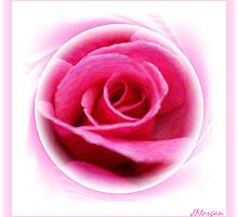 Blushing Pink by Julie's Camera Creations <><