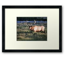 Big Bull Elk Framed Print