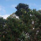 Banksia Tree (2) by lezvee