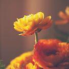Cinnamon Peach by Katayoonphotos