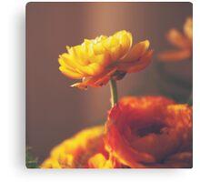 Cinnamon Peach Canvas Print