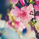 Pink Birth by Katayoonphotos