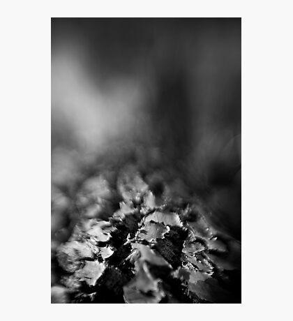 Berima XVI - Lensbaby Photographic Print