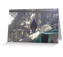 Mrs Magpie Greeting Card