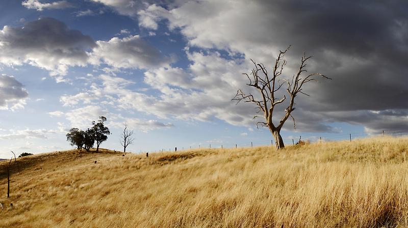 Windswept by David Haviland