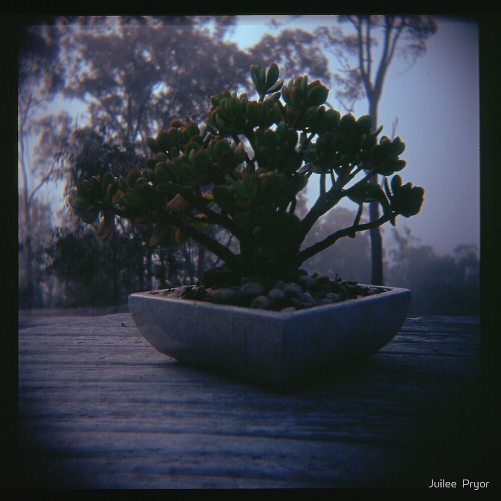 Holga madness..... little bonsai in daniland by Juilee  Pryor