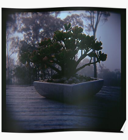 Holga madness..... little bonsai in daniland Poster