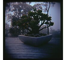 Holga madness..... little bonsai in daniland Photographic Print