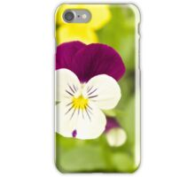 Pansy iPhone Case/Skin