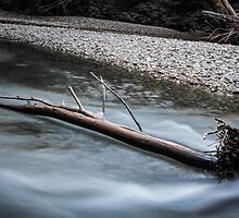 Downed Tree in the Ohanapecosh River by Nicole Petegorsky