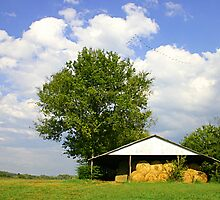 SUMMER DAY ON THE FARM by Patricia Montgomery