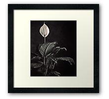 white skunk cabbage Framed Print