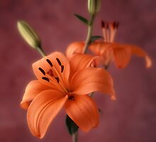 Lily #1 by Joseph Gerges