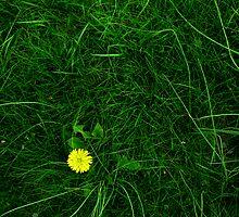 A Spot of Sunshine by Rebecca Cruz