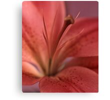 lily #13 Canvas Print
