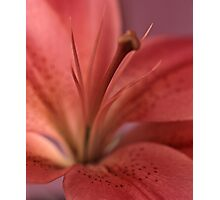 lily #13 Photographic Print