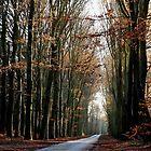High beech-trees in late December by jchanders