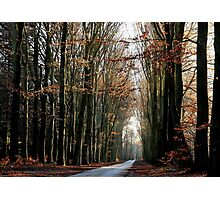 High beech-trees in late December Photographic Print