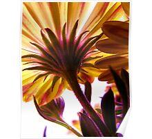 Solar Flair Poster