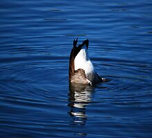 Silly Upside Down Goose by madman4