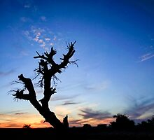 Dry parched tree in a desert landscape at sunset by PhotoStock-Isra