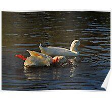 Racing Ducks Poster