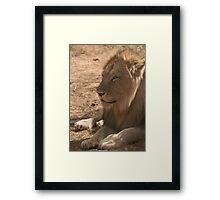 Resting Lion Framed Print