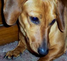Dachshund Revenge by sheena2015