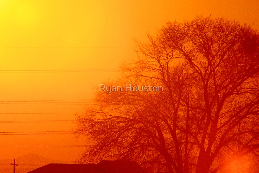 Tree Silhouetted in Red by Ryan Houston