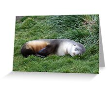 Sleepy Seal Greeting Card