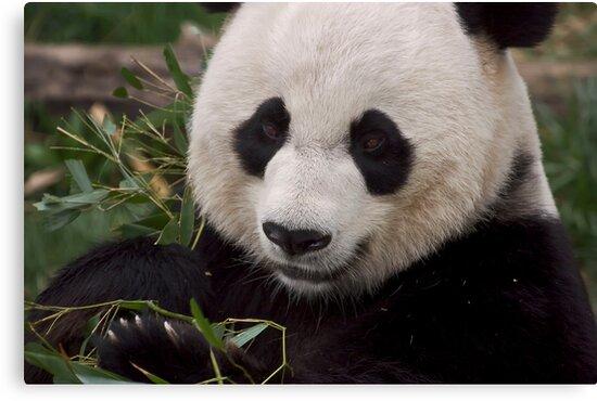 Bamboo by Cheri  McEachin