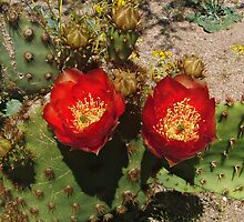 Prickly Pear In Bloom by Walter Colvin