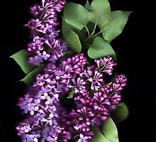 Lilacs  by Nancy Polanski