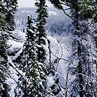 Winter Wonderland by Yukondick