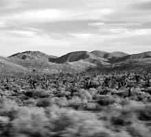 Joshua Tree Desertscape by Benjamin Padgett