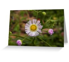 Daisies in the grass Greeting Card