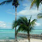 Island Breeze by Elizabeth  Dew