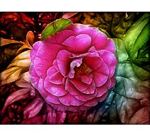 Hot pink silky rose flower Photographic Print